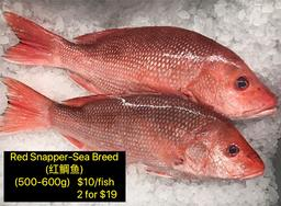 Sea Breed Red Snapper (红鲷鱼)