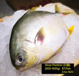 Sea Breed Silver Pomfret (银鲳)