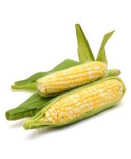 F09 :SUPER SWEET BI-COLOUR CORN ( Cameron Highlands ) 1 pc