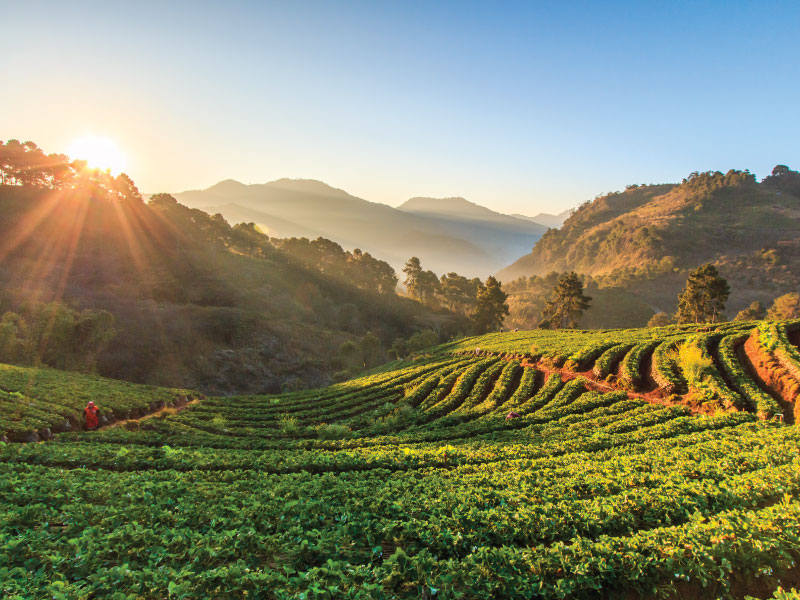 6 Evening Things to do in Chiang Mai