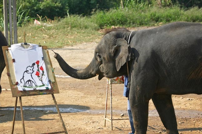 Chiang Mai Elephant Safari Tour