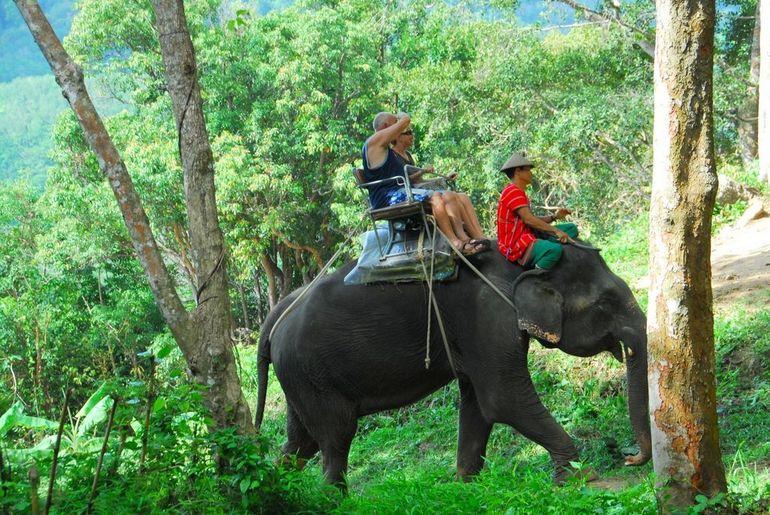 Mini Safari Tour Kayaking Elephant Bathing and Fish Spa