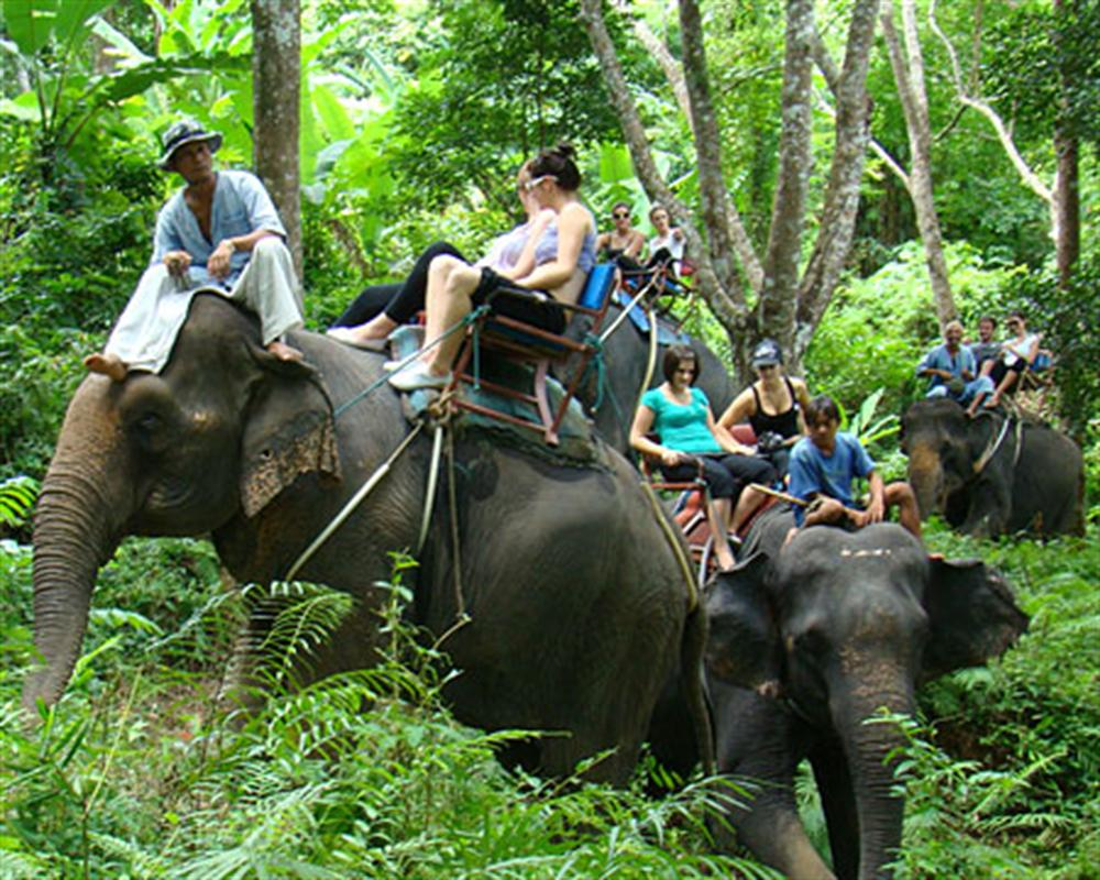 Half Day Safari Tour Elephant Trekking and Kayaking with Lunch