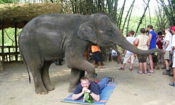 Pattaya Elephant Village