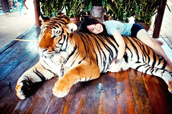 Safari Park Open Zoo and Camp Kanchanaburi