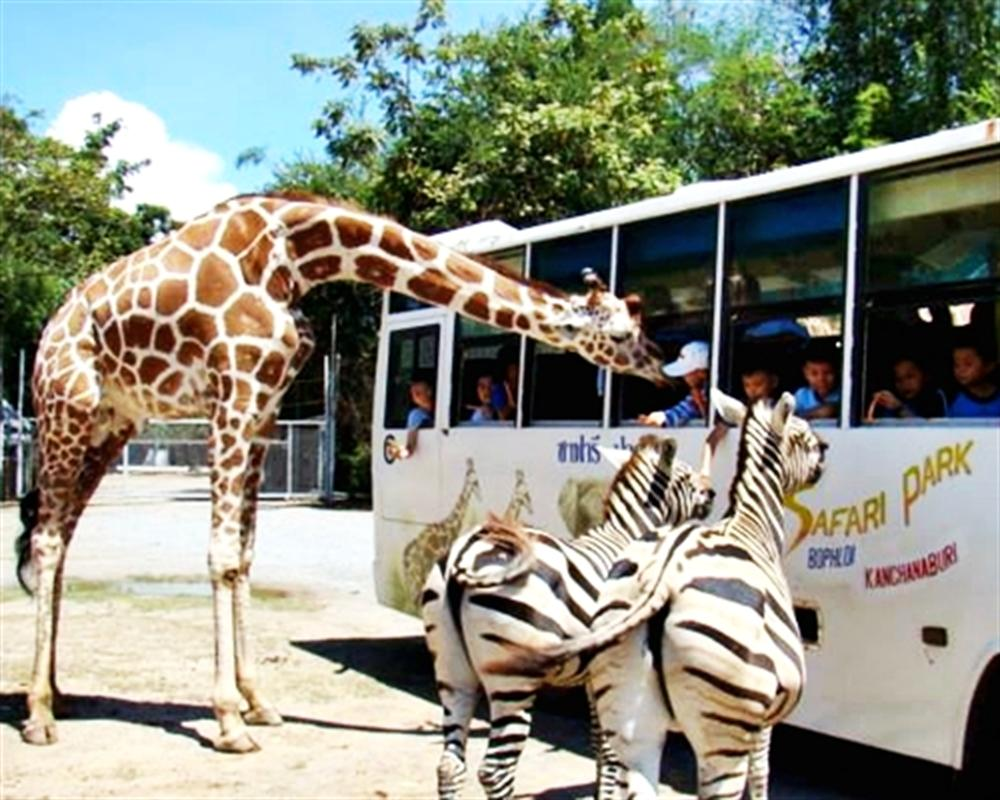 Safari Park Open Zoo and Camp Kanchanaburi