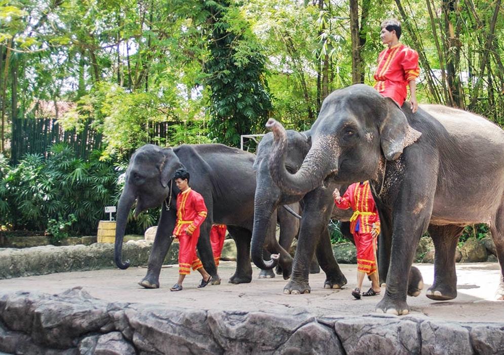 Safari World Bangkok Ticket Only