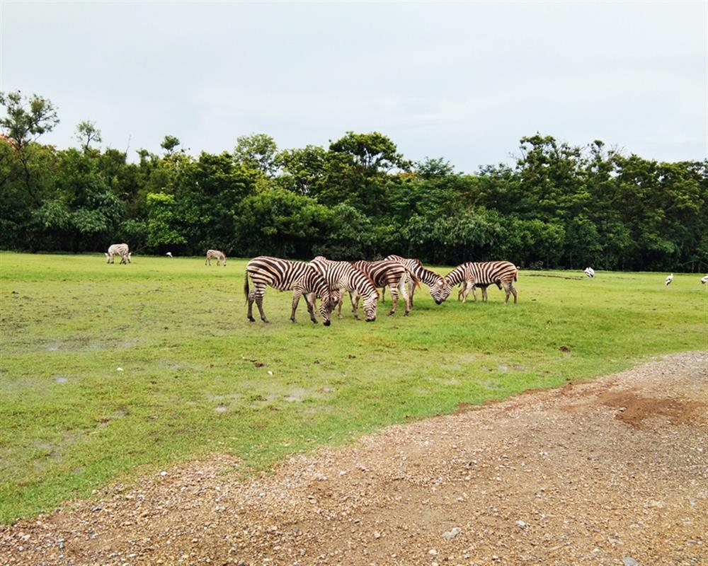 Safari World Bangkok Ticket Only