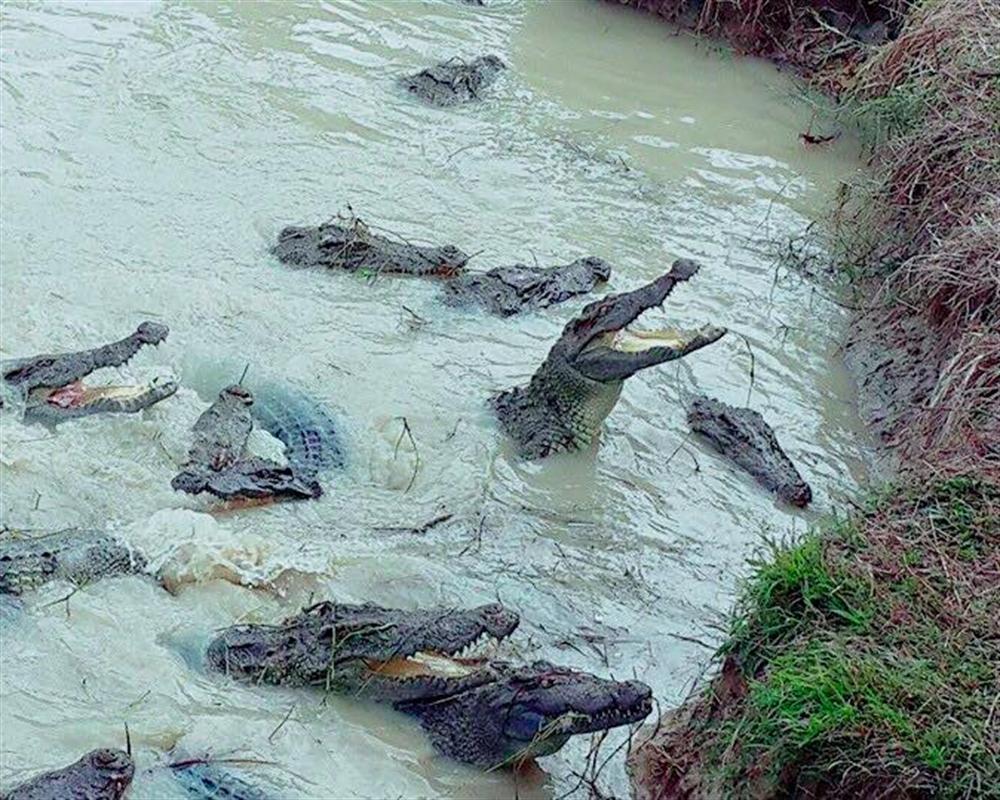 Phokkathara Crocodile Farm and Live Show Chiang Rai