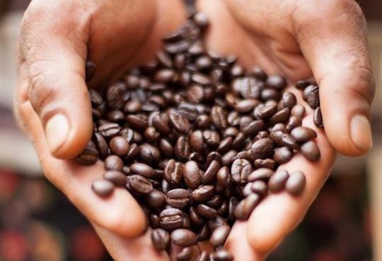 Suan Lahu Coffee and Tribal Experience