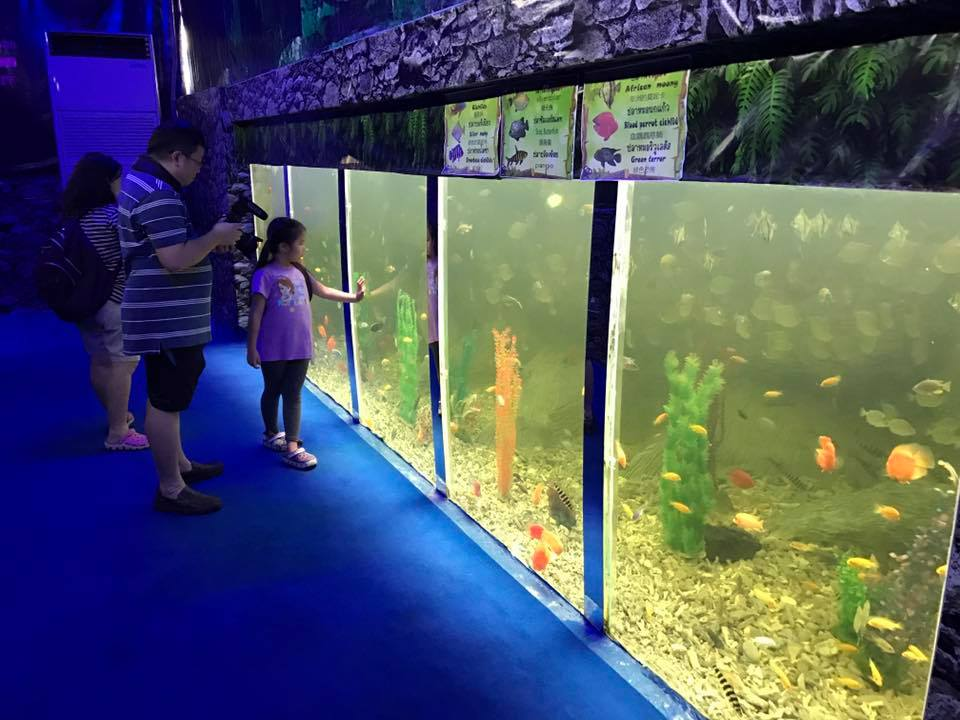Monsters Aquarium Pattaya
