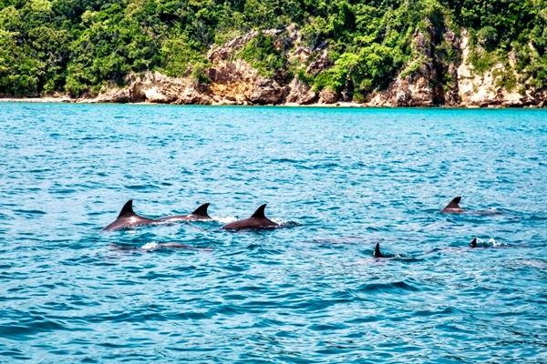 Dolphin Watch+Maithon Island+Racha Sunset Cruise by Power Catamaran