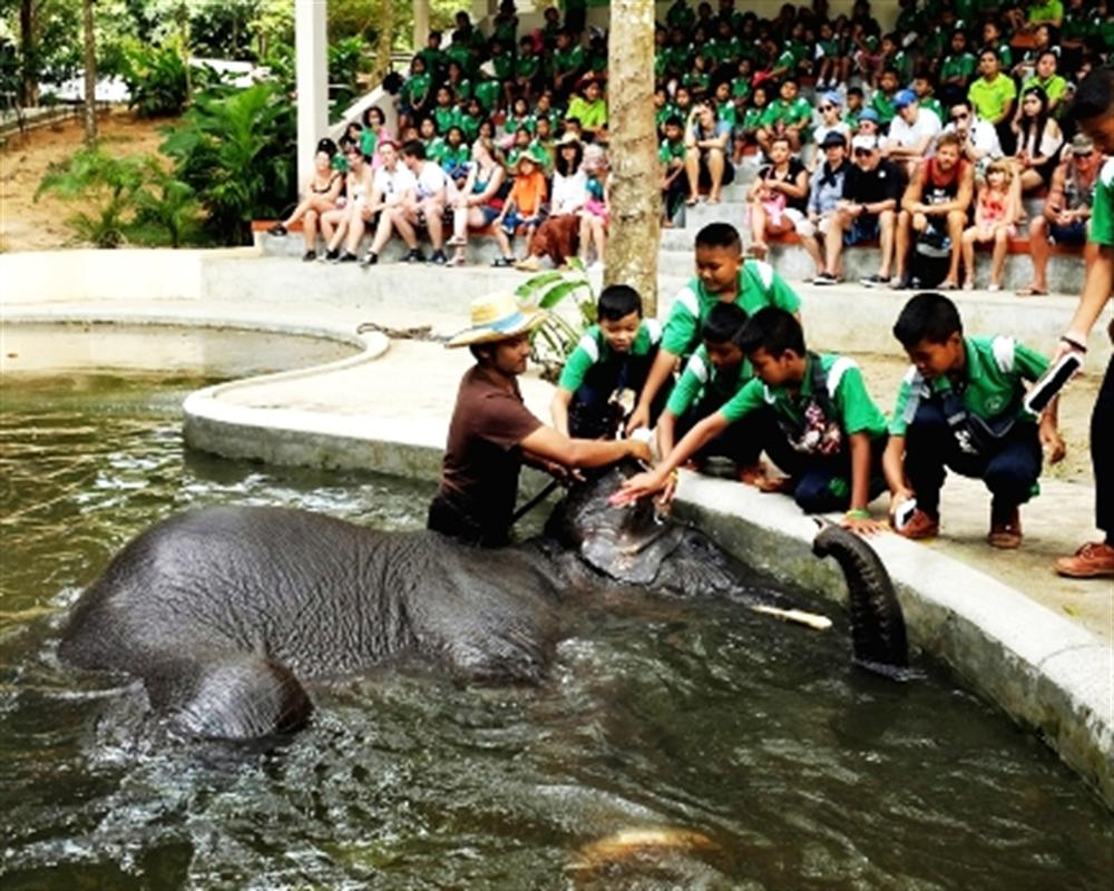 Elephant Trekking and Crocodiles Show in Samui