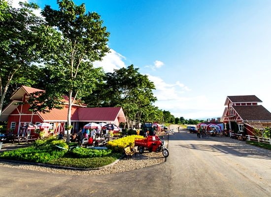 Zipline and Cycling Around Singha Park Chiang Rai
