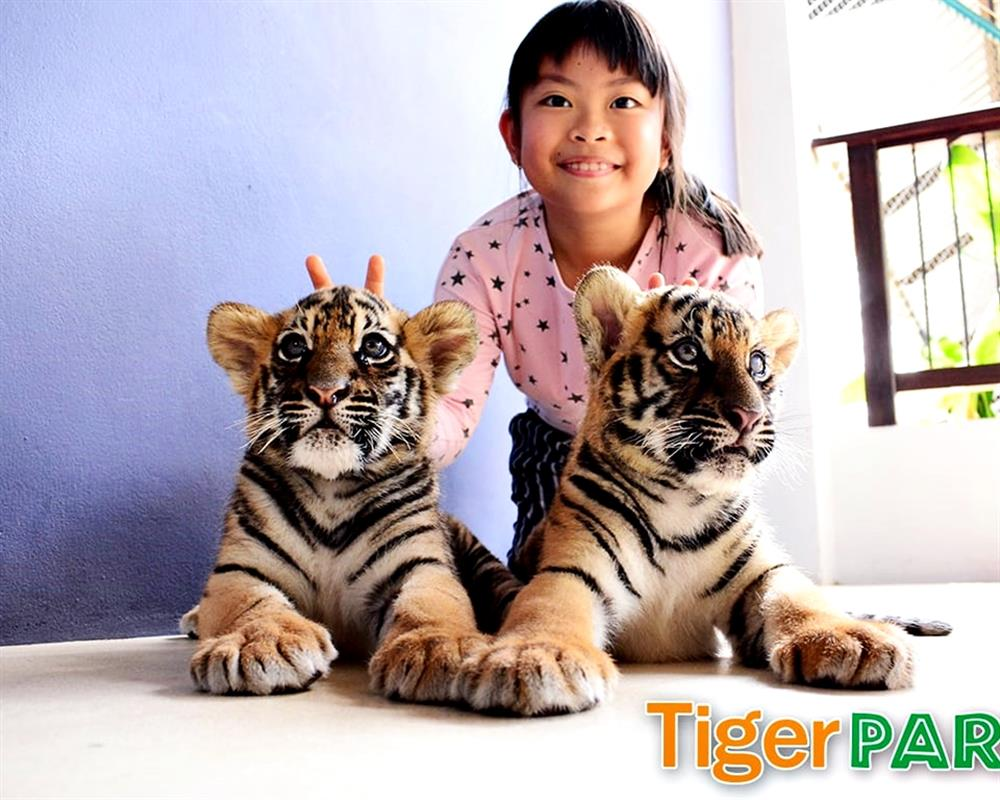 Tiger Park Pattaya