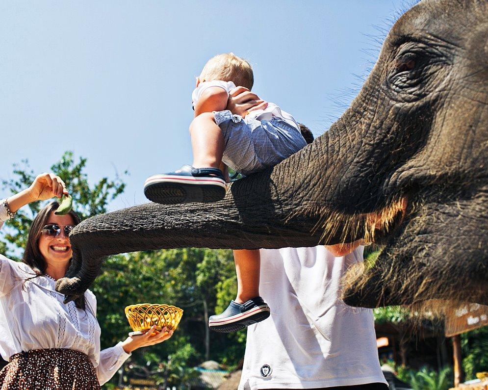 Elephant Bathing and Feeding