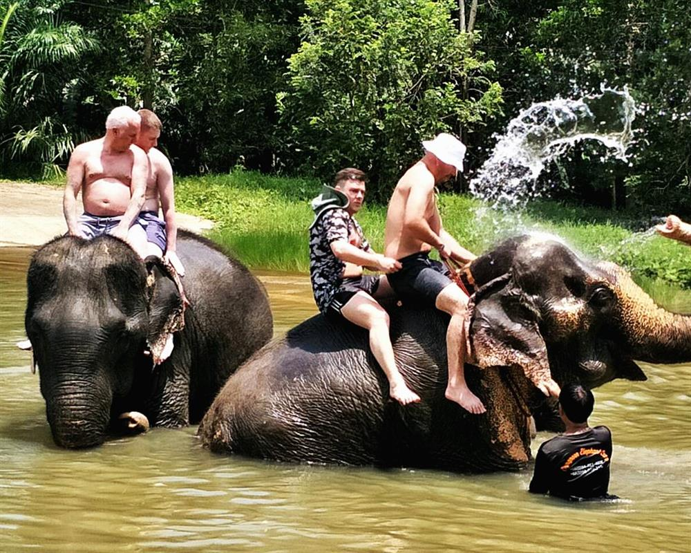 Elephant Bathing and Feeding