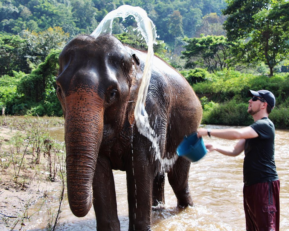 Elephant Bathing Together with Drinking Coffee
