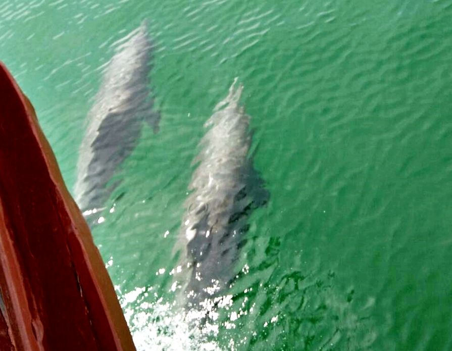 Siam Sea-Cret Cruise to Dolphin Bay & Monkey Island