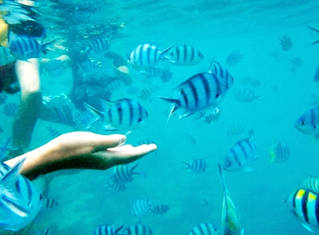 Full Day 5 Islands Snorkeling Tour Koh Chang by Speed Boat