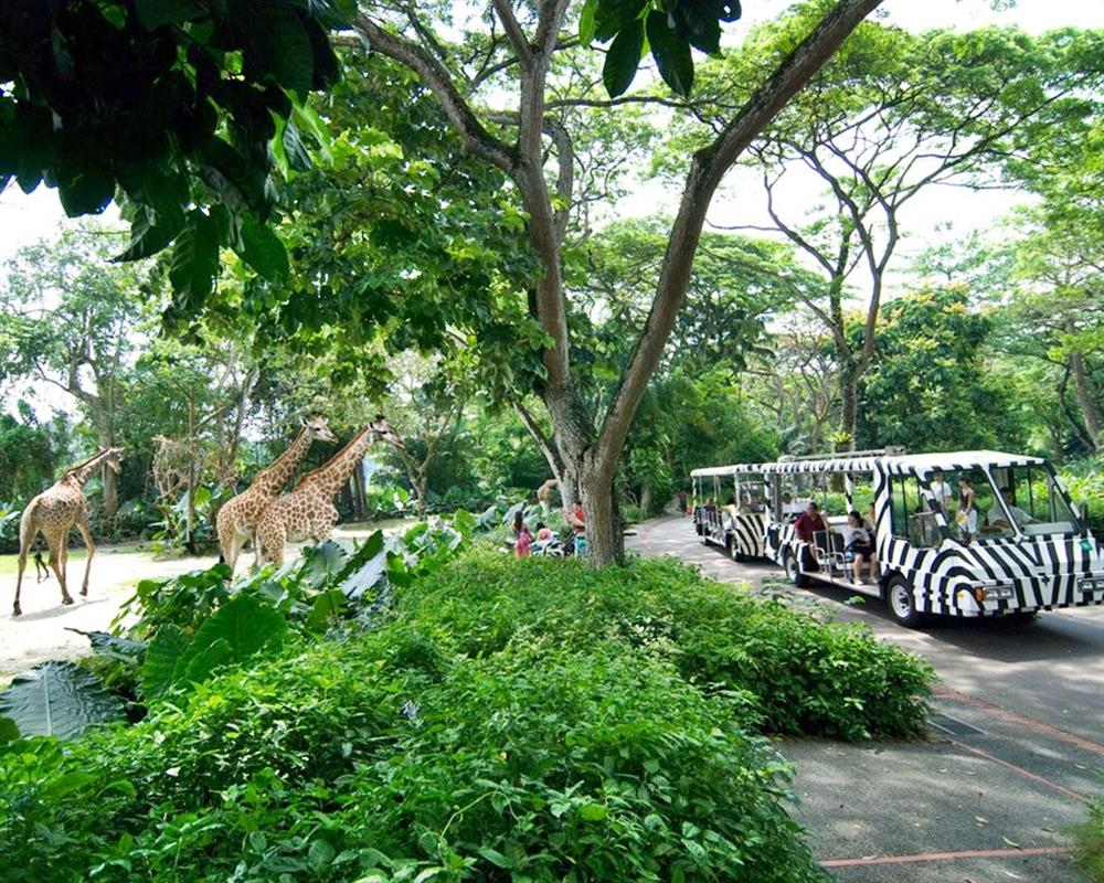 Singapore Zoo Ticket with Tram Ride
