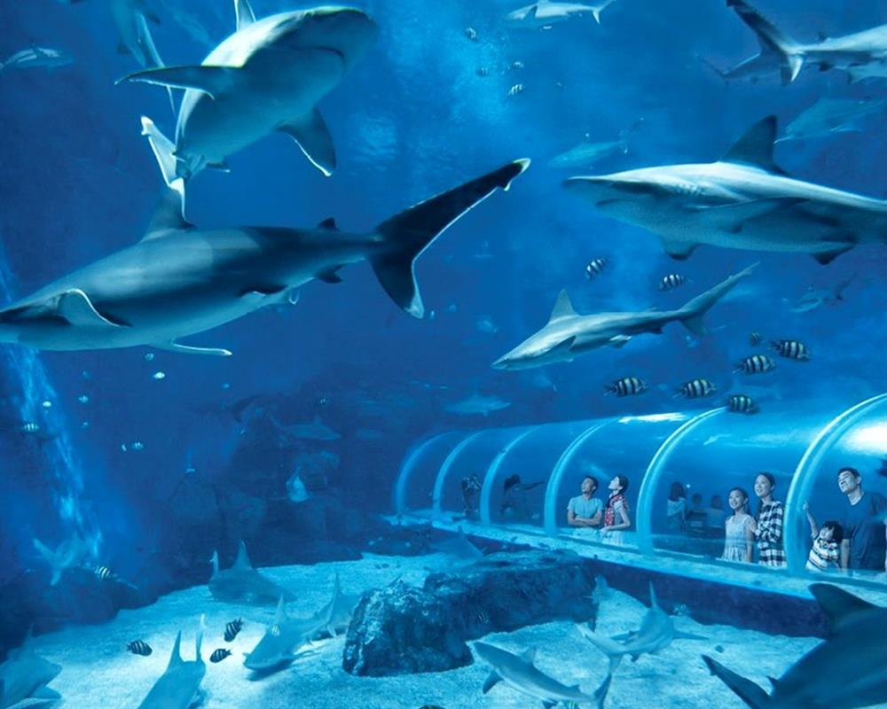 Admission to S.E.A Aquarium Day Pass