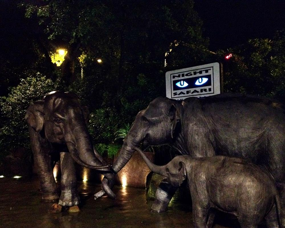 Night Safari Singapore With Tram Ride