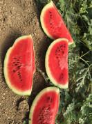 Świeże owoce prosto z Grecji