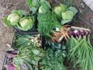 Warzywa 100% Ekologiczne