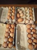 Świeże jaja - wolny wybieg