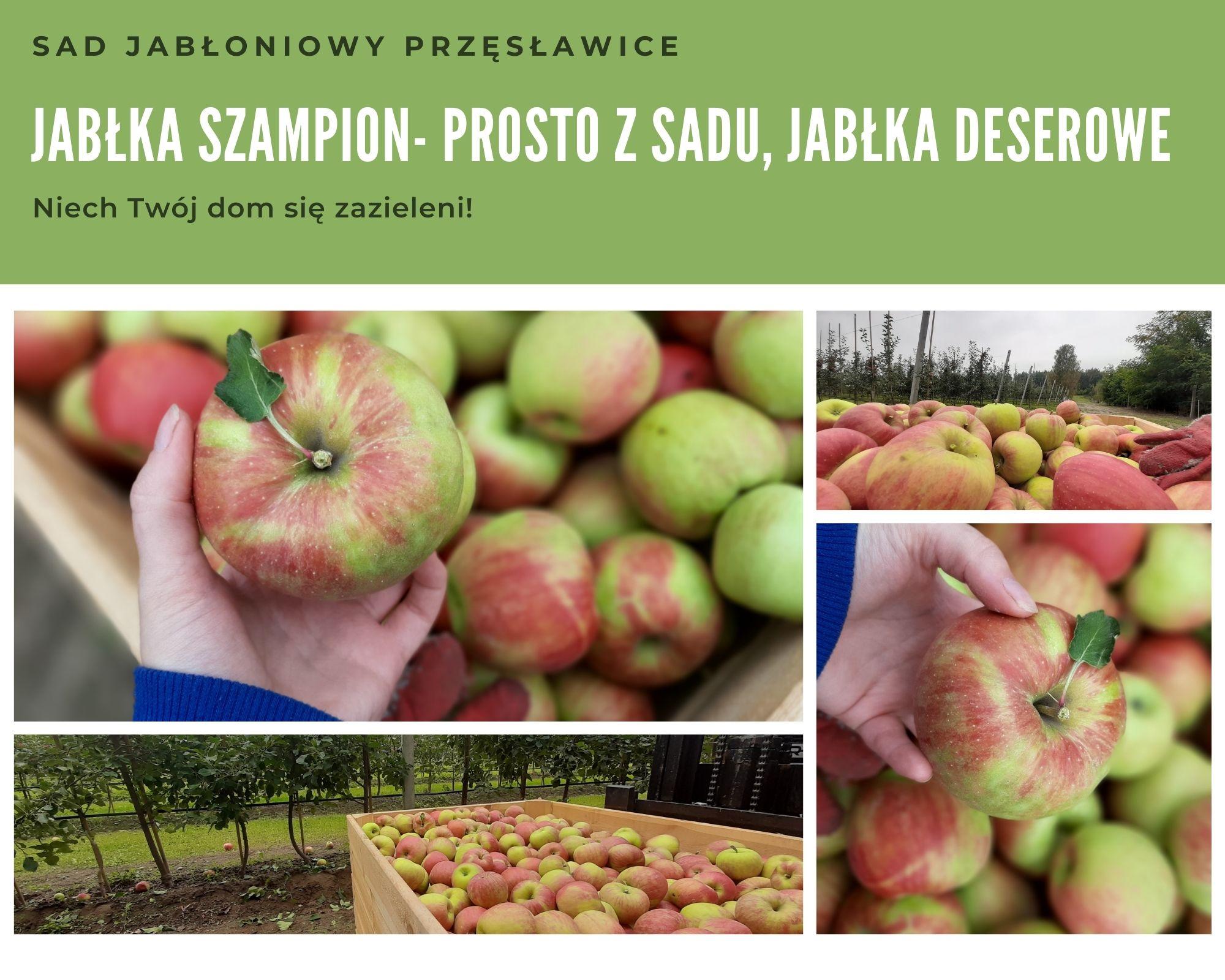 Sad jabłoniowy przęsławice