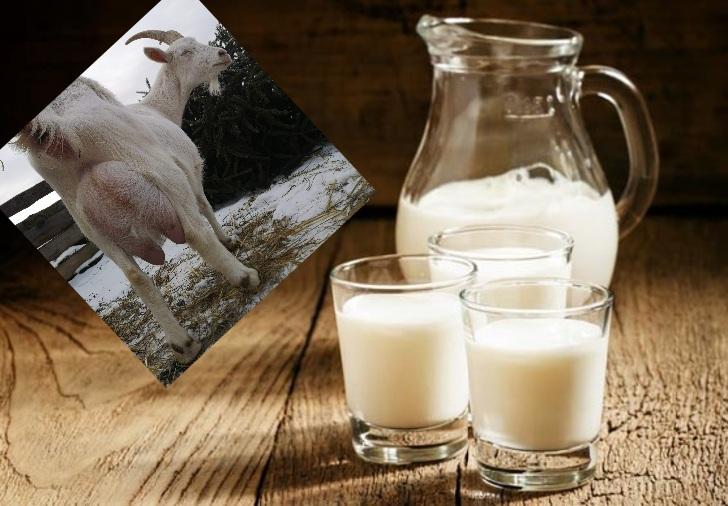 Article-nutrition-6-idées-recues-sur-le-lait-de-chevre-soignon-sw2