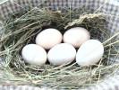 jaja wiejskie z kwasami Omega-3