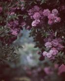 Kwiaty do ogrodu i kwiaty do wazonu