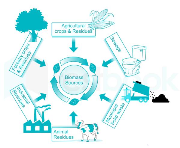 Biomassdiag