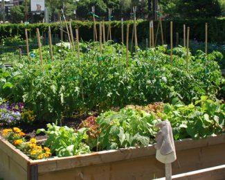 Un jardin collectif, qu'est-ce que c'est ?