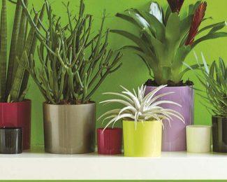 Conseils pour préserver ses plantes d'intérieur pendant l'hiver