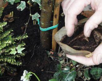 Le marc de café, un véritable allié des jardiniers