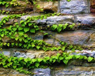 Fleurir votre façade avec une plante grimpante
