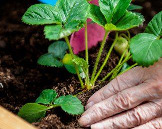 Jardin et Santé :  Zoom sur les jardins thérapeutiques