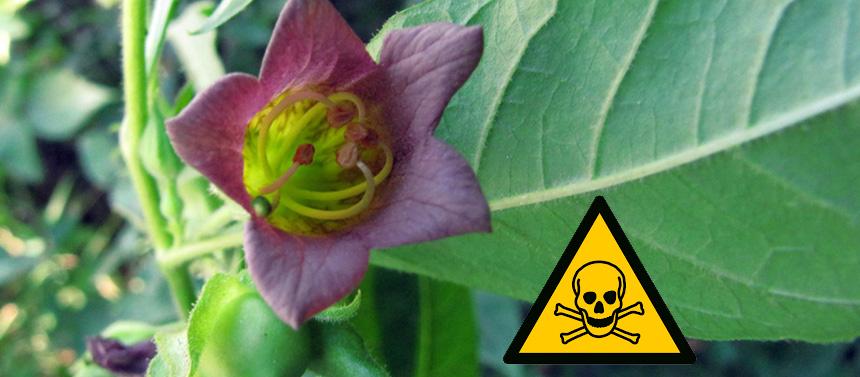 Plantes toxiques dans le jardin, un réel danger pour les animaux de compagnie