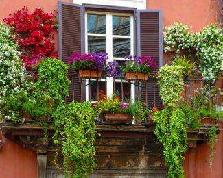 10 plantations pour fleurir votre balcon en ville