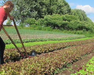 Comment se servir de la grelinette au jardin ?
