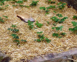 Jardin bio: comment pailler votre jardin potager?