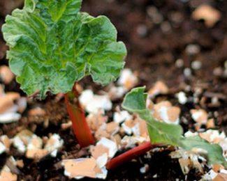 Les coquilles d'œuf, un engrais naturel pour votre jardin