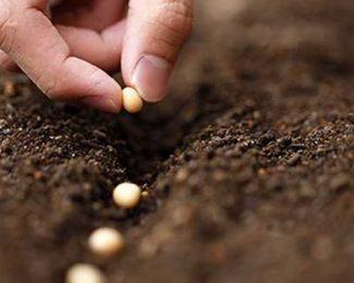 Comment stocker correctement vos graines bio en  attendant de les planter ?