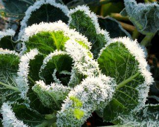 Plantes exotiques : comment protéger ce type de végétaux pendant l'hiver ?