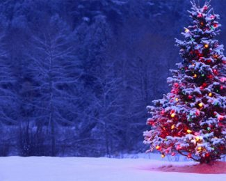 Où jeter votre sapin de Noël ?