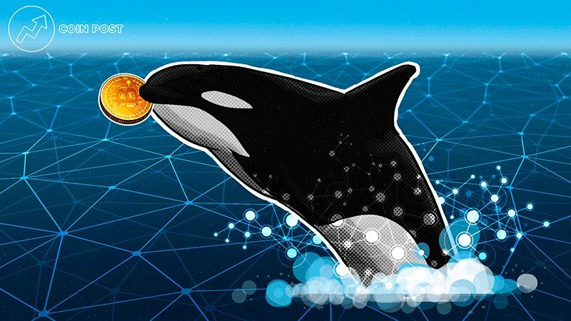 В начале июля объем биткоинов на кошельках «китов» резко увеличился