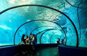 Shanghai-Ocean-Aquarium-Shanghai-China-1